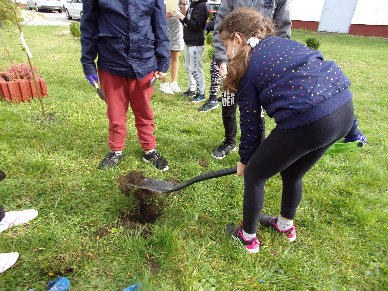 Uczniowie klasy IV podczas akcji sadzenia drzew i krzewinek w ogrodzie przyszkolnym