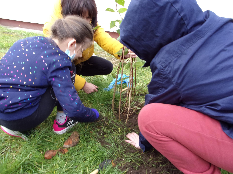 Uczniowie klasy IV z nauczycielem przyrody w czasie akcji sadzenia drzew w ogrodzie przyszkolnym