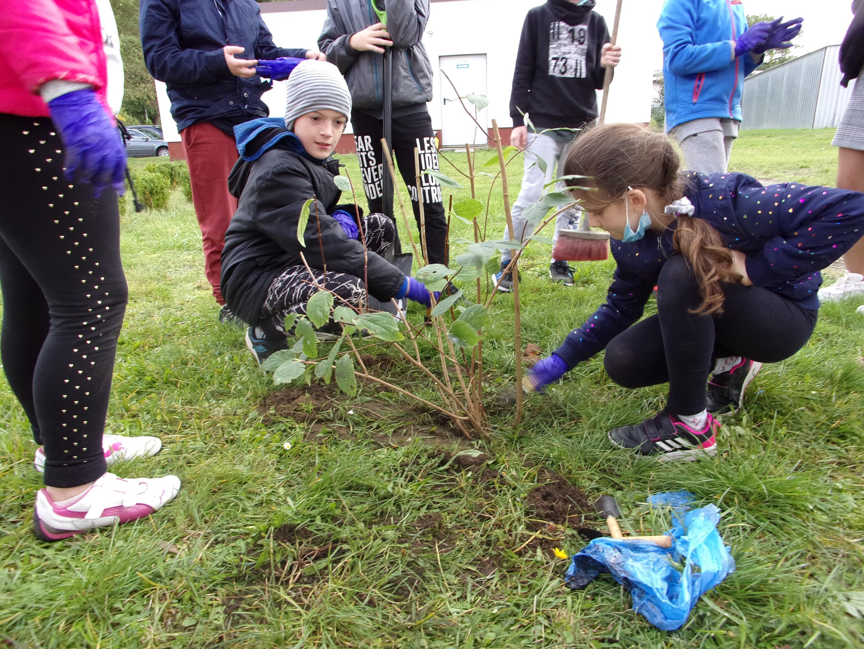 Uczniowie klasy czwartej rozpoznają części drzewka