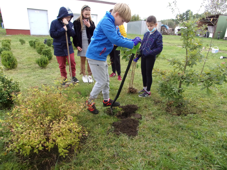 Uczniowie klasy czwartej przygotowują miejsca do nasadzeń drzew