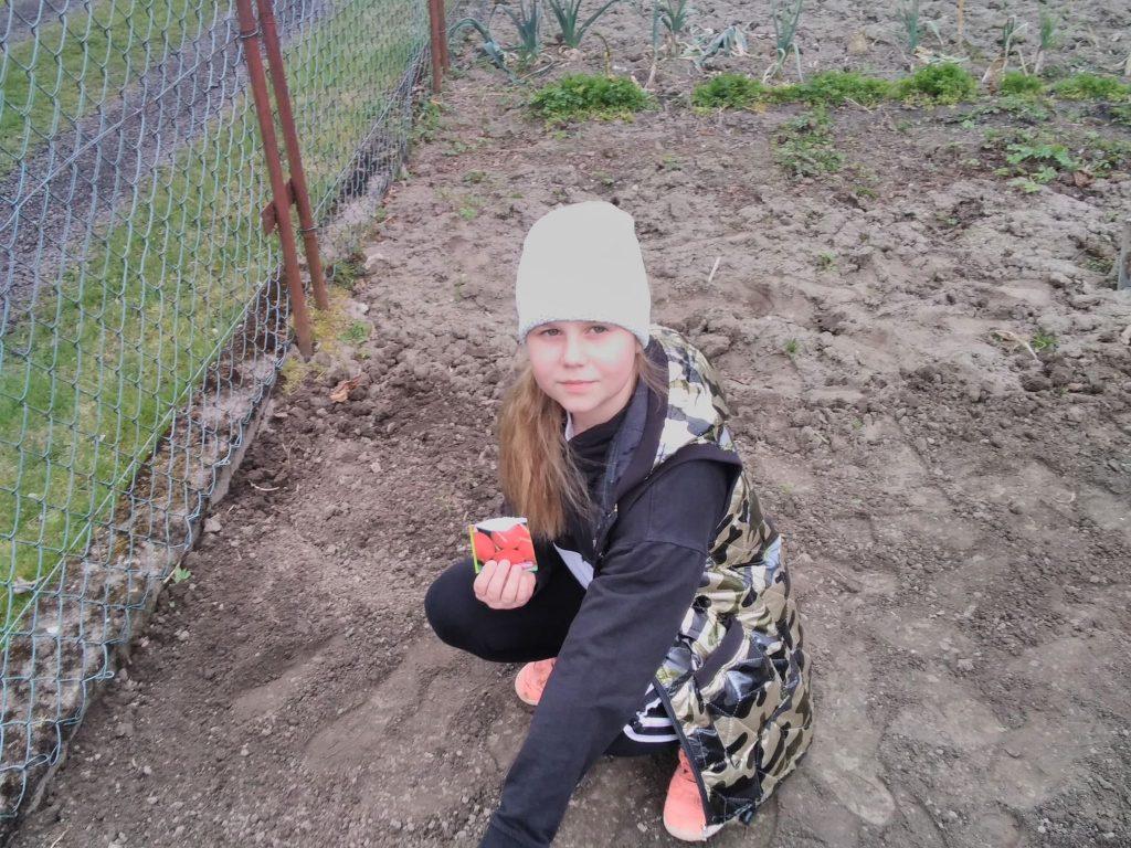 Uczennica klasy drugiej podczas wysiewu warzyw w ogrodzie
